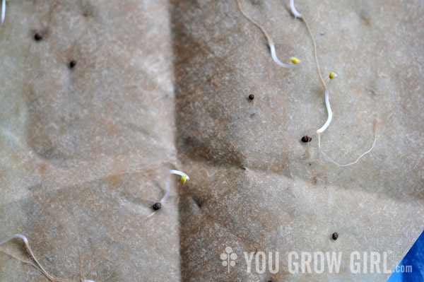 how to find rate of germination