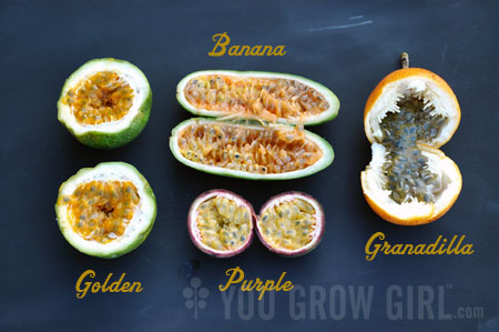 how to grow passionfruit from seed australia